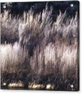 River Sage Acrylic Print