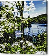 River View Through Flowers. On The Bridge Of Flowers. Acrylic Print