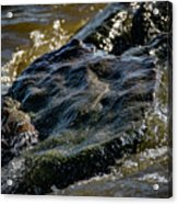 River Washed Rock Acrylic Print