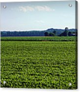 Riverbottom Farms Acrylic Print