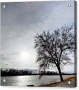 Riverwalk Tree Acrylic Print