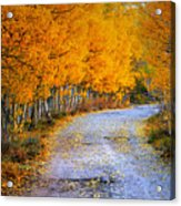Road Between Trees Acrylic Print