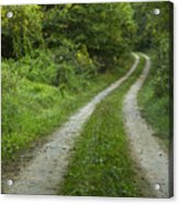 Road In Woods 1 D Acrylic Print
