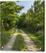 Road In Woods 1 F Acrylic Print