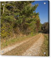 Road In Woods Autumn 6 Acrylic Print