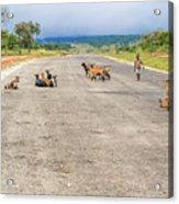 Road In Zambia Acrylic Print