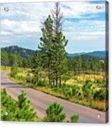Road Through Custer State Park Acrylic Print