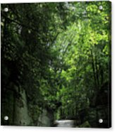 Road Through The Forest Gorge Acrylic Print