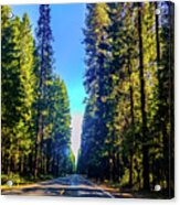 Road Through The Forest Acrylic Print