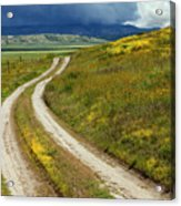 Road Through The Wildflowers Acrylic Print