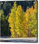 Road To Autumn Acrylic Print