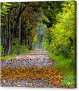 Road To Autumn Acrylic Print