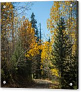 Road To Fall Colors Acrylic Print