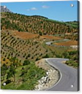 Road Winding Between Fields Of Olive Trees Acrylic Print