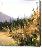 Roadside Apple Tree Acrylic Print