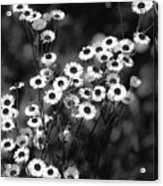 Roadside Wildflowers Acrylic Print