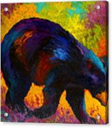 Roaming - Black Bear Acrylic Print