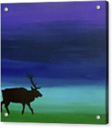 Roaming Elk Acrylic Print
