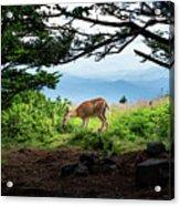 Roan Deer Acrylic Print