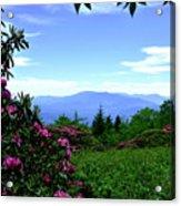 Roan Mountain Rhododendron Gardens Acrylic Print