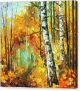 Roaring Birch  Acrylic Print