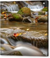 Roaring Fork Stream Great Smoky Mountains Acrylic Print