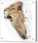 Roaring Lion No 04 Acrylic Print