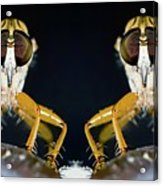 Robber Fly - Alien Visitors Acrylic Print