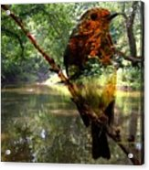 Robin By The River Acrylic Print