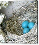 Robin Eggs In A Wreath Acrylic Print by Marqueta Graham