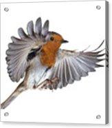 Robin Flying Acrylic Print