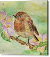 Robin In Flowers Acrylic Print
