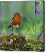 Robin In Spring Wood Acrylic Print