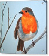 Robin In The Tree Acrylic Print