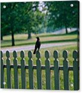 Robin On A Fence Acrylic Print