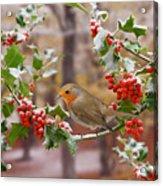 Robin On Holly Twigs Acrylic Print