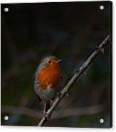 Robin On The Branch Acrylic Print