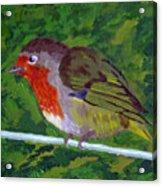Robin Acrylic Print