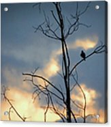 Robin Watching Sunset After The Storm Acrylic Print