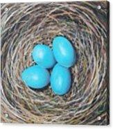 Robin's Eggs Acrylic Print