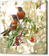 Robins In Holly Acrylic Print
