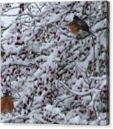 Robins In The Snow Acrylic Print