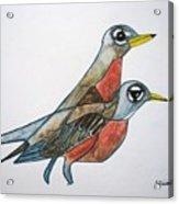 Robins Partner Acrylic Print