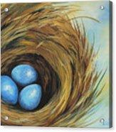 Robin's Three Eggs II Acrylic Print