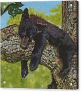 Rock-a-bye-baby/the Wild Bunch #2 Acrylic Print