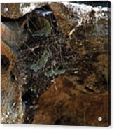 Rock Abstract With A Web Acrylic Print