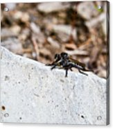 Rock And Robber Fly Acrylic Print