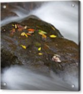 Rock In Water Acrylic Print