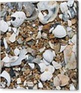 Rock N Shells Acrylic Print
