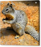 Rock Squirrel Acrylic Print